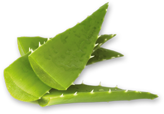 Aloe Toulouse Forever products